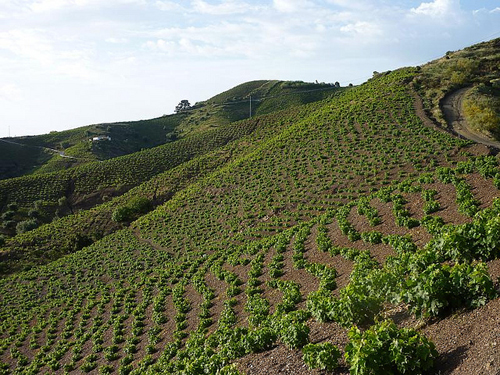 winemaking in the axarquia