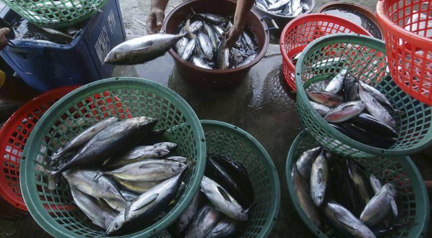 illegal fish