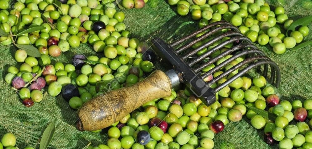 olive farmers face increase in tariffs after American trade deal