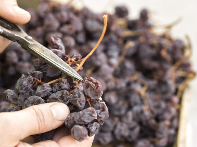 Ancient Axarquia dried grape process is recognised as by the United Nations